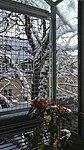Valentinhaus-Gärten im Winter 12.jpg