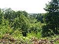 Valley of the Marbury Brook - geograph.org.uk - 641431.jpg