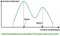 Variation phénotypique Courbe bimodale.PNG