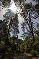 Veliki Gradski Park, Tivat - panoramio.jpg