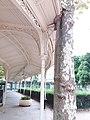 Vichy - Parc des Sources, passerelle couverte, arbre encastré.jpg