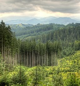 View from Yablonitsky Pass over the Eastern Carpathians (5292-94).jpg