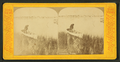View of man fishing, Jacksonville, Fla, from Robert N. Dennis collection of stereoscopic views.png