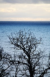 View of tree and sea in the protected area of Femöre, Sweden.jpg