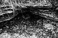 Virulase koobas.jpg