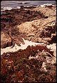WILD FLOWERS BLOOM AT SHELL BEACH POINT - NARA - 543204.jpg