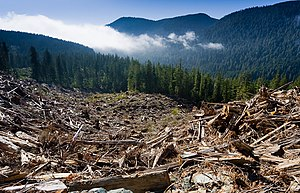 A sprawling clearcut of old-growth forest stre...