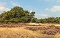 Wandeltocht door bloeiende heidevelden en zandverstuivingen van de Schaopedobbe (Schapenpoel) 11.jpg