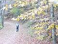 Wanderweg 4, Schoenecken - geo.hlipp.de - 6254.jpg