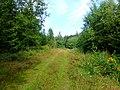 Wanderwege bei Kirschweiler, Nähe Ringkopf - panoramio.jpg