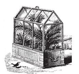 Terrarium - A drawing of a Wardian case