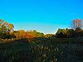 Warner Park - panoramio (57).jpg