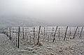 Weinstöcke im Winter Geo-Naturpark Bergstraße-Odenwald.JPG