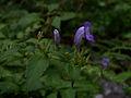 Whf purple 37.jpg