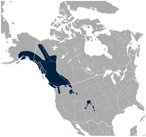 White-tailed ptarmigan - Image: White tailed Ptarmigan Lagopus leucura distribution map