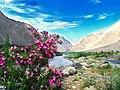 Wild Roses of Ladakh.jpg