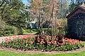 Willowwood Arboretum, Chester Township, NJ - tulip garden.jpg