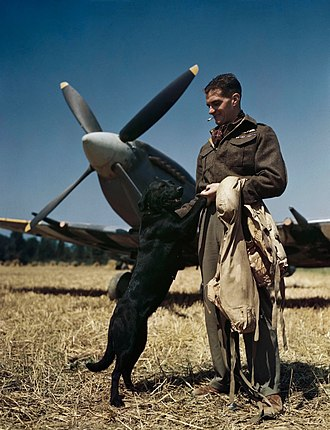 Johnnie Johnson (RAF officer) - Wing Commander Johnson at Bazenville Landing Ground, Normandy, July 1944, with his Labrador, Sally