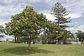 Wollongong - panoramio (3).jpg