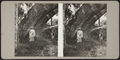 Woman sitting under the tree, from Robert N. Dennis collection of stereoscopic views.png