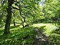 Woodland Exmoor Devon - geograph.org.uk - 212224.jpg