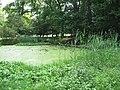 Woodland Pond near the Monument Ashridge, in late June - geograph.org.uk - 1377884.jpg