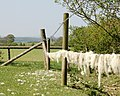 Wool on the wire - geograph.org.uk - 1263478.jpg