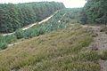 Wrzosowe wydmy, Puszcza Notecka, okolice Chojna (15).JPG