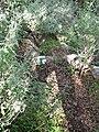 Yagur – Nesher, the Green Path – Mount Carmel 108.JPG