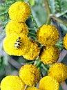 Yellow in Oregon.jpg