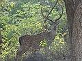 Yercaud deer park.jpg