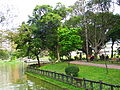 Youth Park Lotus Pond and Nine Curves Bridge.jpg