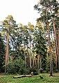 Zhukovskiy, Moscow Oblast, Russia - panoramio (45).jpg