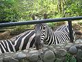Zoológico de Cali 100.JPG