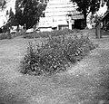 """""""Lešica"""" (njivica) s krompirjem in fižolom pri Mas?lcu, Sp. Trenta 1952.jpg"""