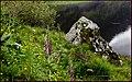 'Honeymoon Rock', Loch Achtriochtan, Glen Coe. - panoramio.jpg