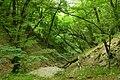 'Quercus petraea, Fagus orientalis, & Carpinus caucasica forest, Abrau Peninsula.jpg