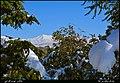 (((مناظر پارک معلم مراغه))) - panoramio.jpg