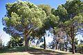 ® MADRID PARQUE EMPERATRIZ MARIA DE AUSTRIA PASEO - panoramio - Concepcion AMAT ORTA… (16).jpg