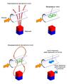 Анемометрия силой Лоренца (принцип).png