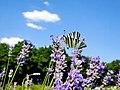 Дніпропетровський ботанічний сад 17.JPG