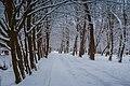 Зимові алеї в парку.jpg