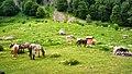 "Коне край х.Рай-Национален парк ""Централен Балкан"" - panoramio.jpg"