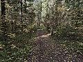 Лесные дорожки к Акуловскому 5.jpg