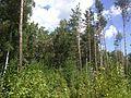 Лесок)) - panoramio.jpg