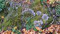 Ораниенбаум, Верхний парк02dif2.jpg