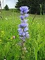 Орхидея и панаска детелина 07.jpg