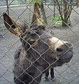 Осёл (Penza Zoo 2009).jpg