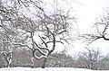 Парк Заріччя у Хмельницькому. Фото 12.jpg