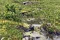Полярный Урал, Югыд ва, ручей с горы.jpg